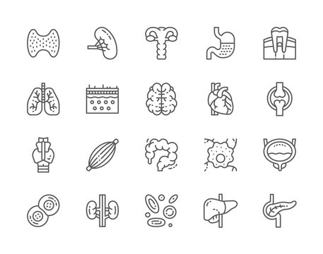 Set of Human Organs Line Icons. Spleen, Stomach, Lungs, Brain, Heart and more.