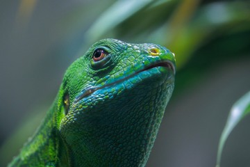 reptile with brown eye