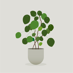 Illustration of green plant in a pot . Pilea Plant