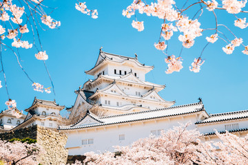 Himeji Castle with spring cherry blossoms in Japan