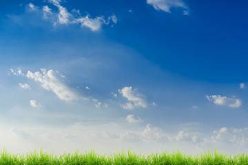 green grass and blue sky The grassy field with long pointed leaves is blown. And the sky in the evening during the summer season is taken as a background image Or additional decorations Can enter text