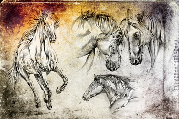 freehand horse head art illustration
