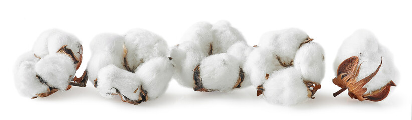 Row of cotton flowers on white background