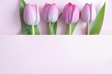 Fototapete - Seasonal tulips