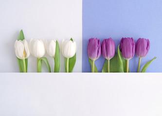 Fototapete - Spring flower design