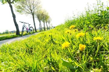 Löwenzahn am Fahrradweg