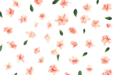 Flowers background . Pink flowers azalea  pattern on white background. Top view.  Holiday concept