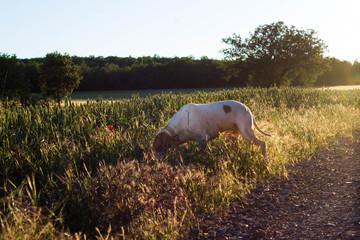Perro en el campo en primavera