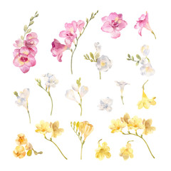 collection of hand painted watercolor flowers freesias