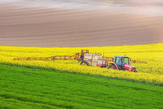 agricuteur travaillant dans les champs de colza en fleur