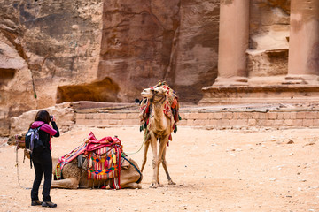 A tourist is taking pictures of two beautiful camels in front of Al Khazneh (The Treasury) at Petra. Petra is a historical and archaeological city in southern Jordan.
