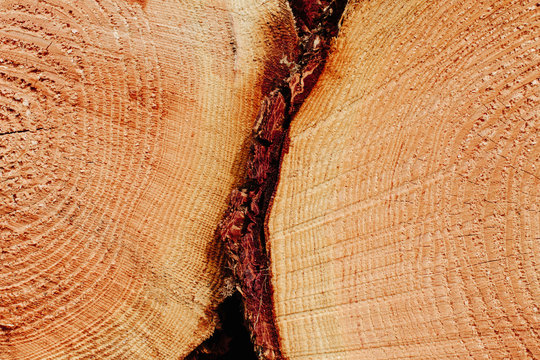 Sawn ends of timber logs, cut wood, with wood grain pattern. ,Pacific County