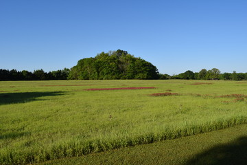 Ingomar Mounds and field in Mississippi
