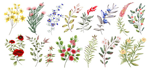 Watercolor illustration. Botanical collection. Set of wild and garden flowers.  Leaves, flowers, branches and other natural elements.