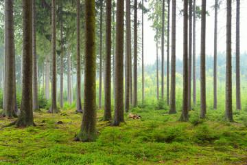 Fotobehang Bossen Spruce Forest, Germany, Europe