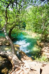 Krka, Sibenik, Croatia - An old tree trunk growing vertically across the river