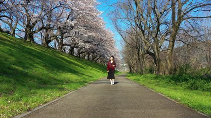 Wall Mural - Young woman walking in Row of Cherry blossoms tree in Kyoto, Japan.
