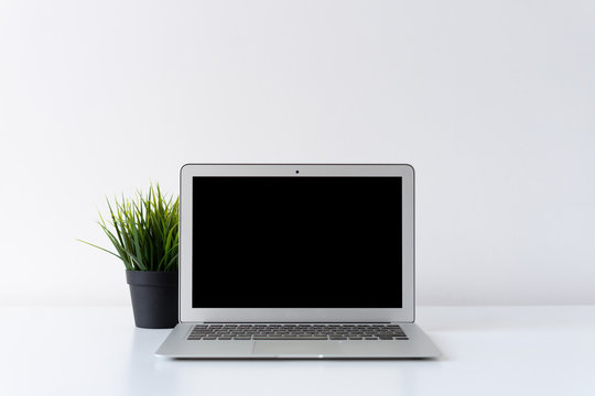 Open laptop and green plant on the desk with white background