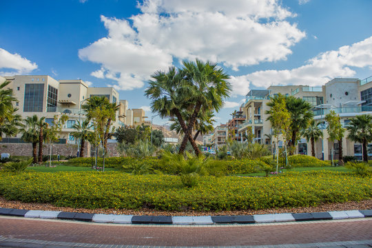 south tropic city street ring road around flower bed with green grass surface and palm trees, small building apartments background, summer bright colorful hot season weather time