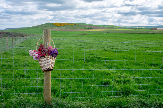 A flower basket: colors and beauty in the country.