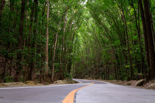 Bilar Man-Made Forest In Bohol, Philippines. Tall Green Trees tower over a winding road, unique and perfect place to travel and experience the world, the road is encouraging adventure and exploration.