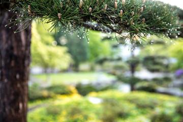 Der Park Planten un Blomen in Hamburg