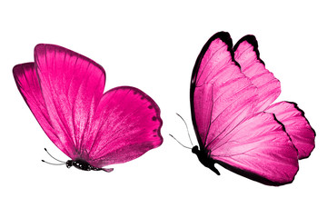 Deep pink butterflies. isolated on white background. tropical moths.