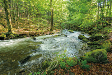 wild rapid river in the ancient beech forest. stones covered in moss on the shore of a powerful water flow. beautiful nature background. refreshing summer scenery