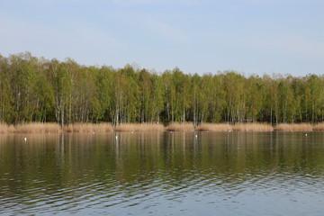 Ein See im Frühling