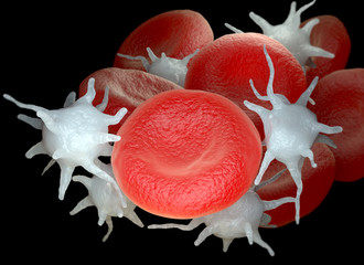 Red blood cells and activated platelets or thrombocytes