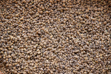 Seeds of sugar beet for sowing fields
