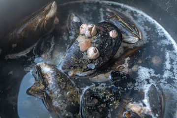 Foto op Aluminium Body Paint steamed mussels boiling in the water