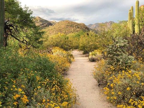 Southwest Arizona Hiking Trail at Sabino Canyon in Tucson, Arizona in Spring.