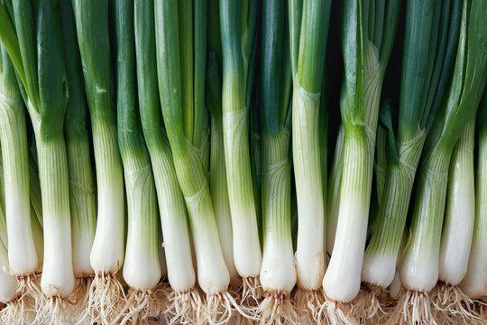 Full Frame Shot Of Spring Onions