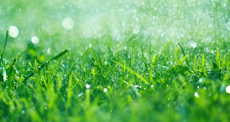 Grass with rain drops. Watering lawn. Fresh green spring grass with dew drops closeup. Soft focus. Abstract nature spring background Wall mural