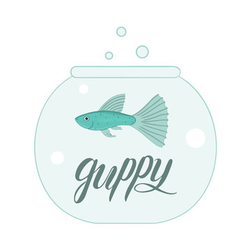 Vector colored illustration of fish in aquarium with fish name lettering. Cute picture of guppy for pet shops or children illustration