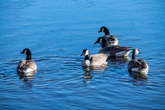 DSC1030D850 Ducks on pond