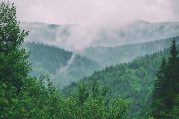 Foggy morning landscape Wall mural