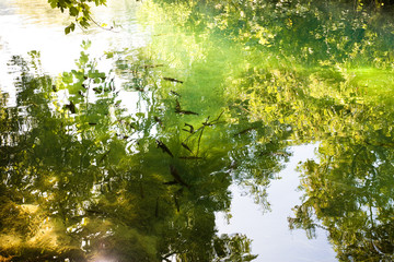 Krka, Sibenik, Croatia - Light reflection upon the river surface of KrKa National Park