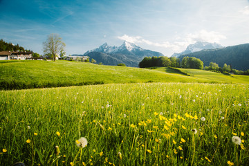 Wall Mural - Idyllic landscape in the Alps with blooming meadows in springtime