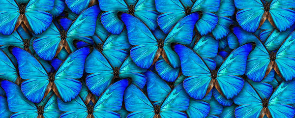 Beautiful natural background with a lot of vibrant blue butterflys. Photo collage art work. A high resolution