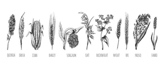 Wheat ears cereals crop sketch set