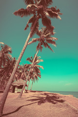 Beautiful sunny day at tropical beach with palm trees and bungalow Ocean landscape in vintage style. India
