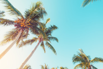 Wall Mural - Palm tree on tropical beach with blue sky and sunlight in summer, uprisen angle. vintage filter effect