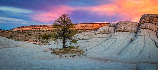 Colorful scene in the desert southwest, Utah, USA. Fotoväggar