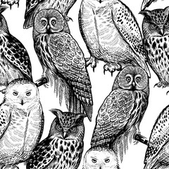 Owls. Seamless pattern with birds. Black and white.