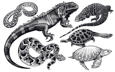 Lizards, snakes and turtles set. Isolated black sketch on white background.