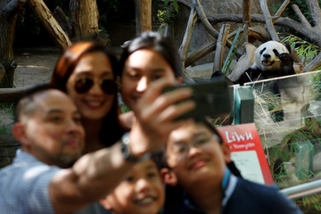 Family takes a picture with giant male panda Xiao Liwu as they visit the San Diego Zoo