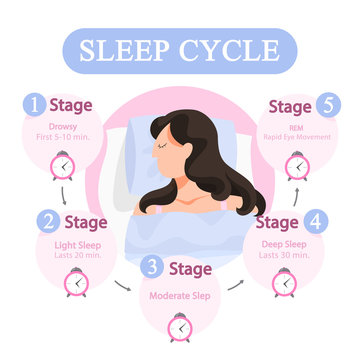 Sleep cycle infographics. Stage of sleep during