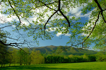 Cades Cove in the early spring, Smoky Mountains, TN, USA